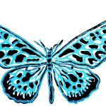 Butterfly Collection Print
